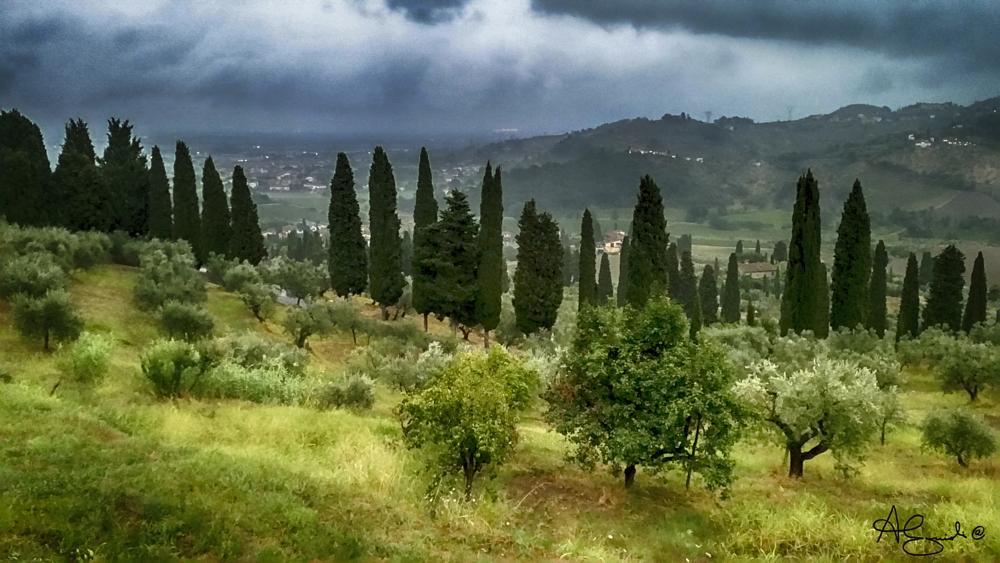 Photo in Landscape #capezzana #carmignano #prato