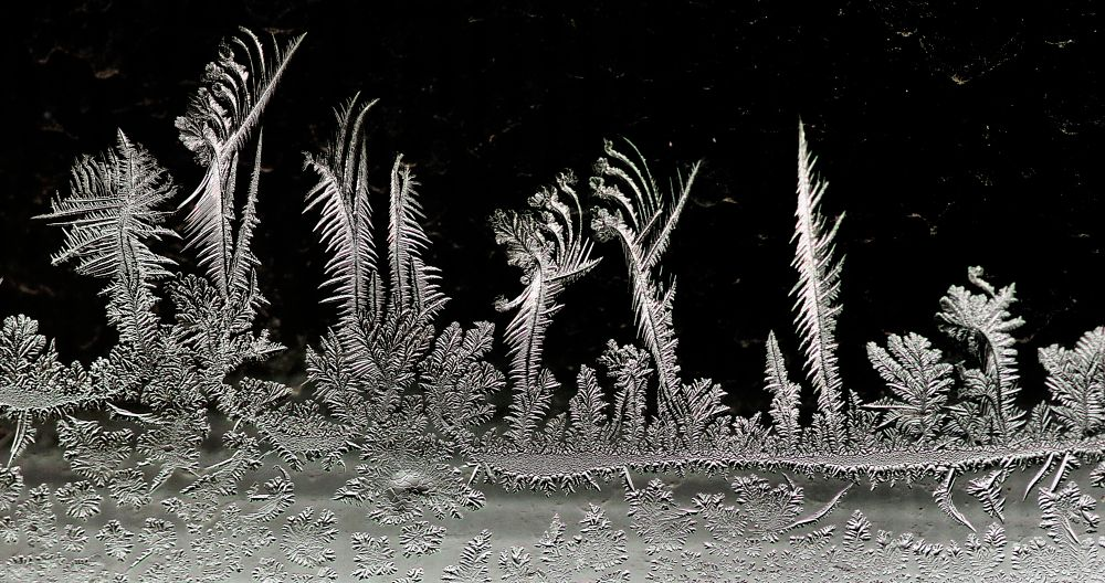 Photo in Nature #frost #icey #winter wonderland