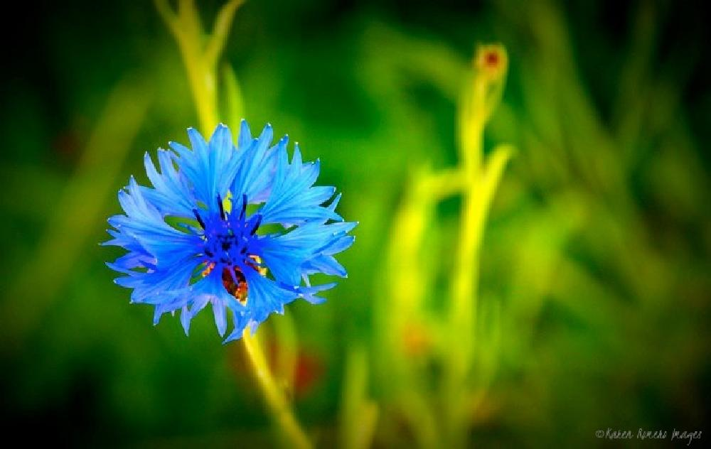 Photo in Nature #blue #flower #dainty #cooper mountain park #park #nature #trails #scenic #nature walk #peaceful