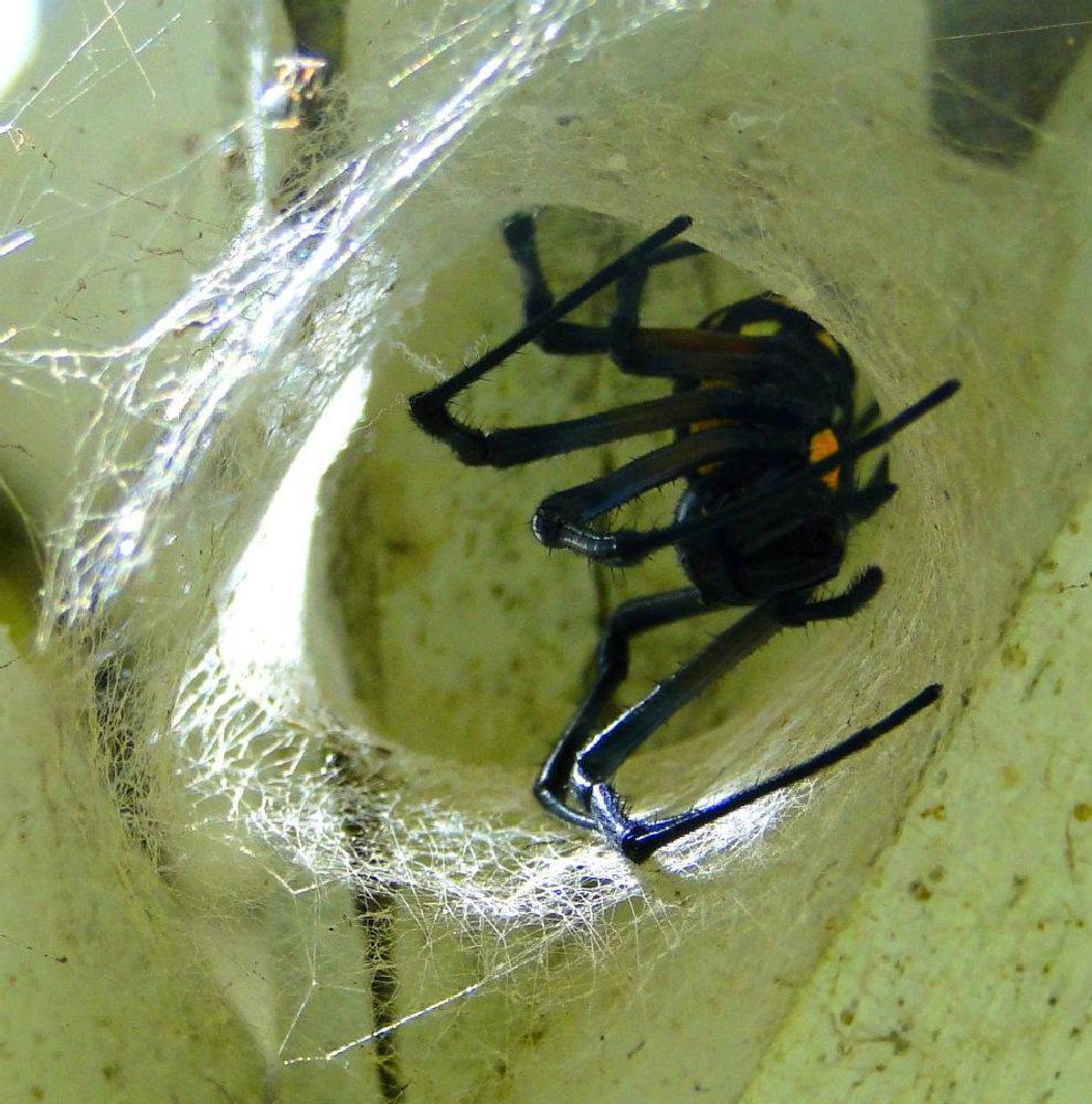 Photo in Animal #spiders #brazil #espirito santo
