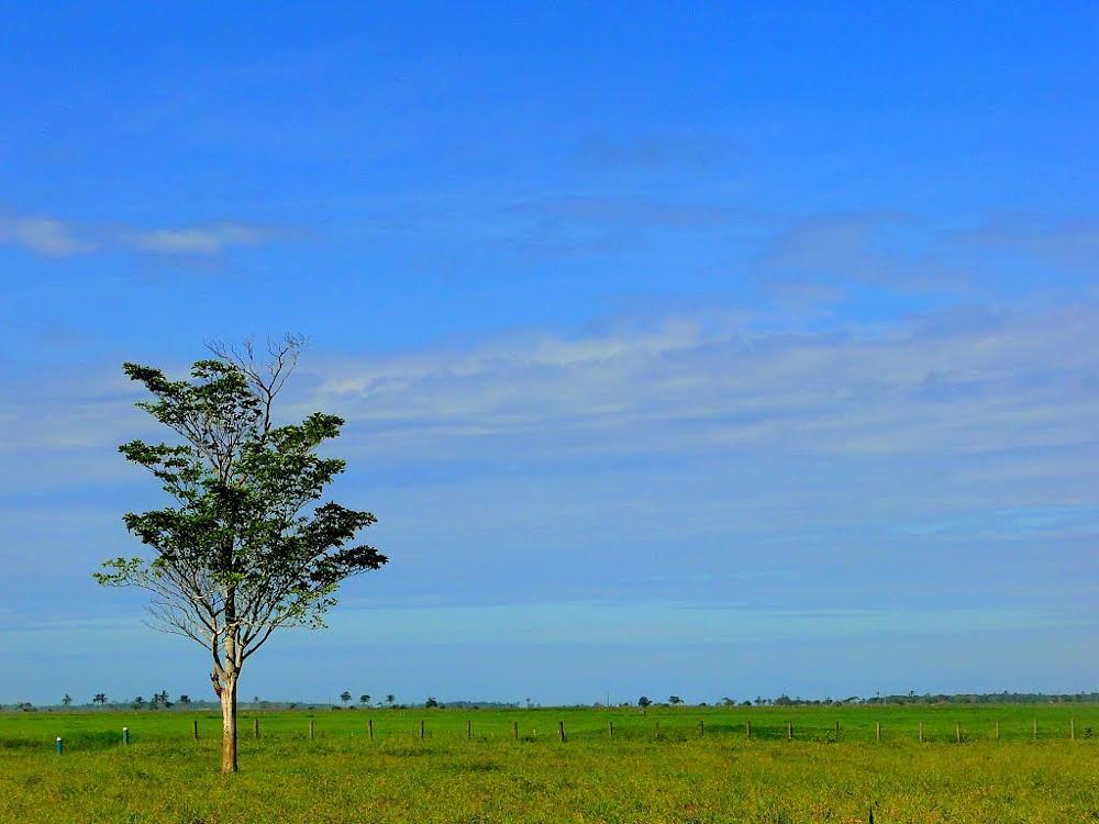 Photo in Landscape #tree #espirito santo #brazil