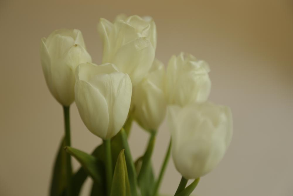 Photo in Still Life #mother's day #flowers