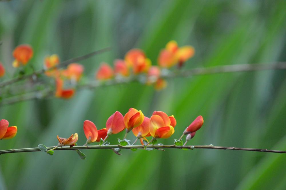 Photo in Macro #macro #orange #flower #texture #light