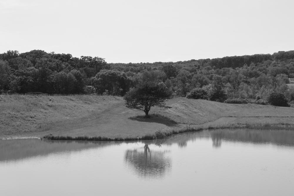 Photo in Black and White #b&w #reflection #shadow #water #tree