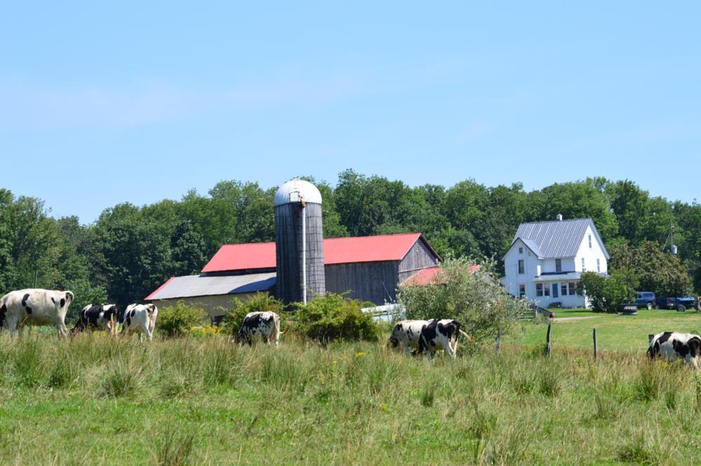 Photo in Landscape #barn #cows #green #sky #treeline #fields