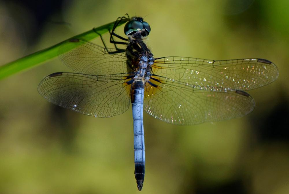 Photo in Animal #dragonfly #insect #macro