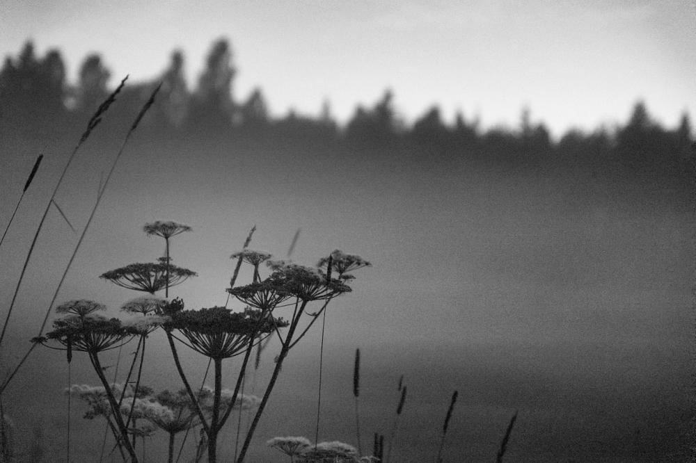 Photo in Nature #autum #visitnorway #bw #sony