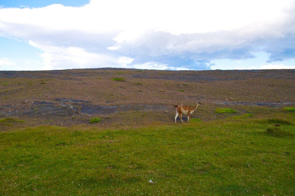 Photo in Random #alpaca #torres del paine
