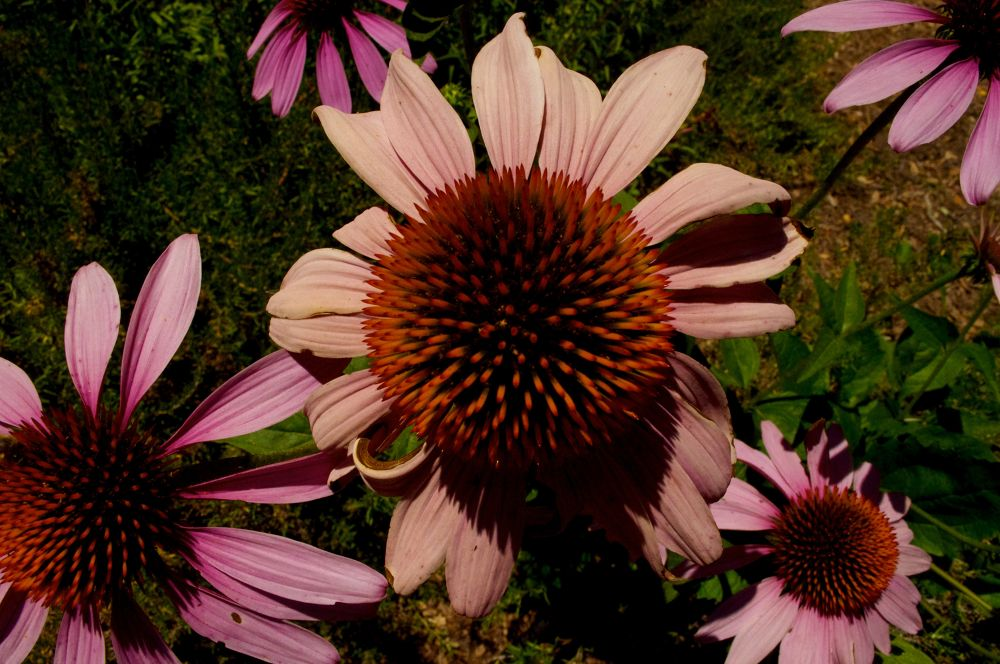 Photo in Macro #flower #ypa2013 #photocontest