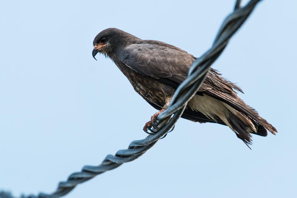 Photo in Animal #brentrosenthal #birds #nature