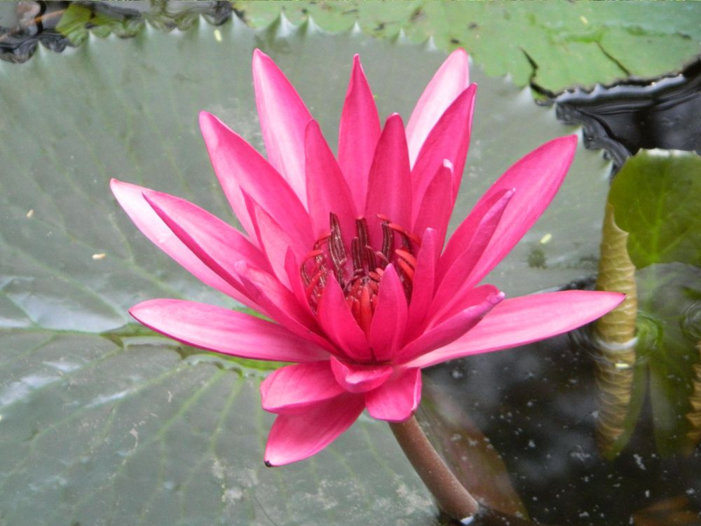 Photo in Random #indroda park gandhiniagar #indroda #indroda park #lotus flower #lotus #flower