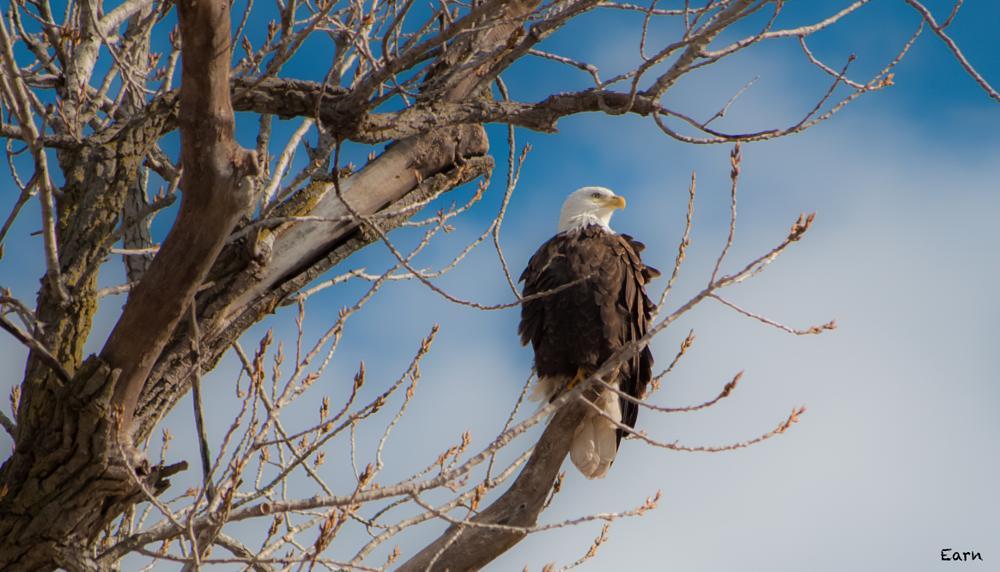Photo in Nature #eagle