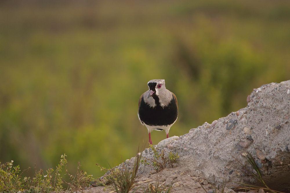 Photo in Animal #la serena