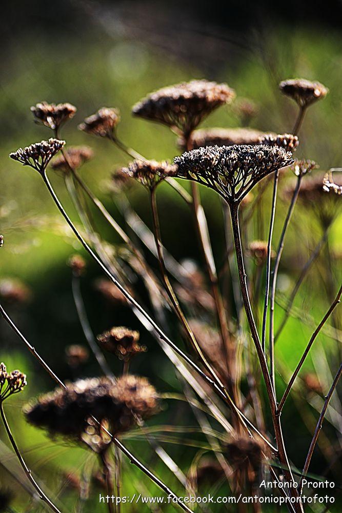 Photo in Still Life #nature #natureza #brown #castanho #verde #green #ypa2013 #autumn #outono #caer #tomber