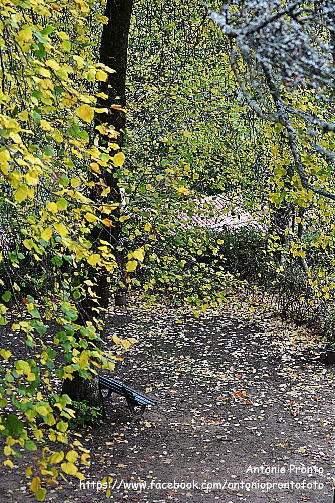 Photo in Nature #nature #natureza #sintra #garden #jardim #park bench #banco de jardim #tree #árvore #outono #autumn #ypa2013 #portugal