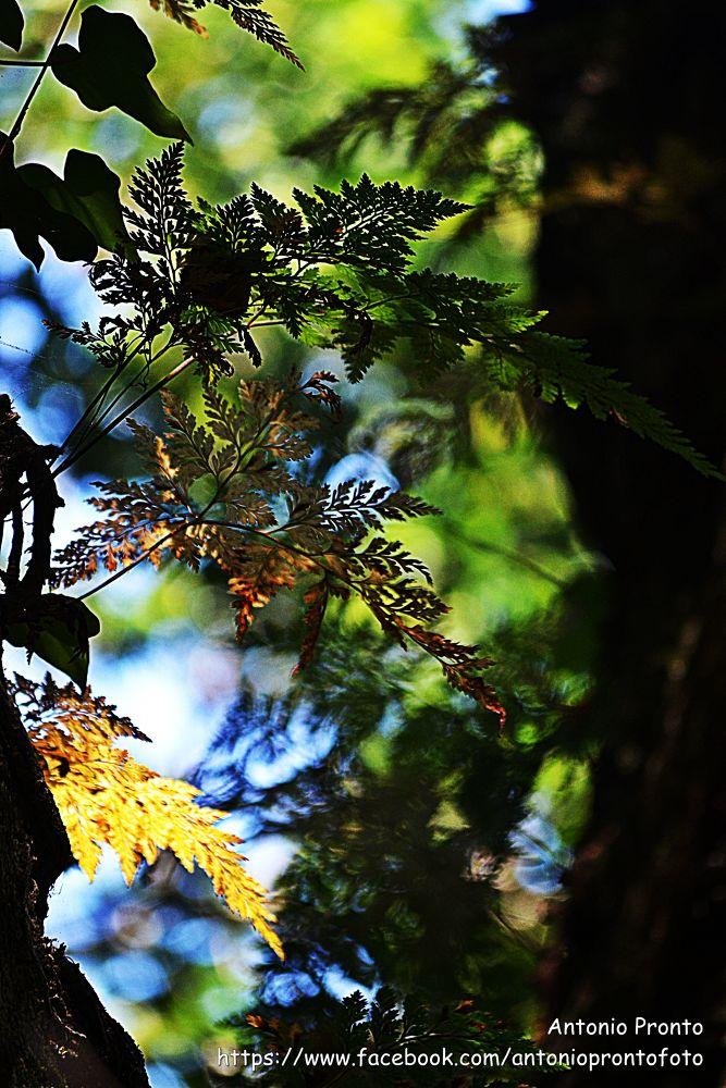 Photo in Nature #sintra #natureza #nature #fetus #feto #gren #verde #ypa2013 #summer #verao