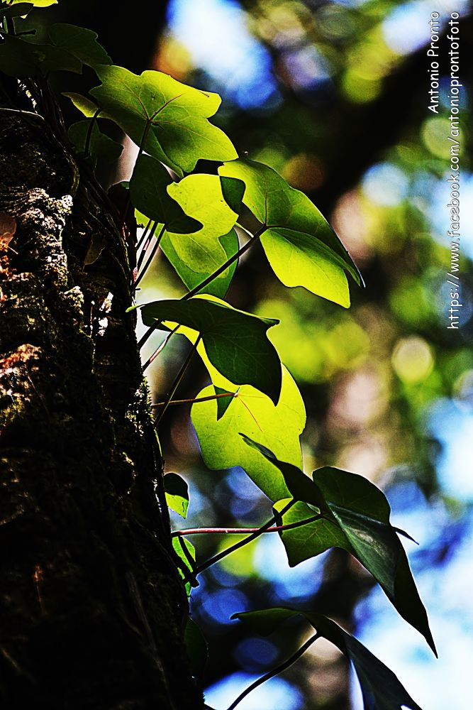 Photo in Nature #foliage #folhagem #green #verde #nature #natureza #arvore #tree #ypa2013