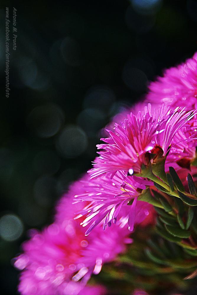 Photo in Macro #flor #flower #nature #natureza #antonio pronto