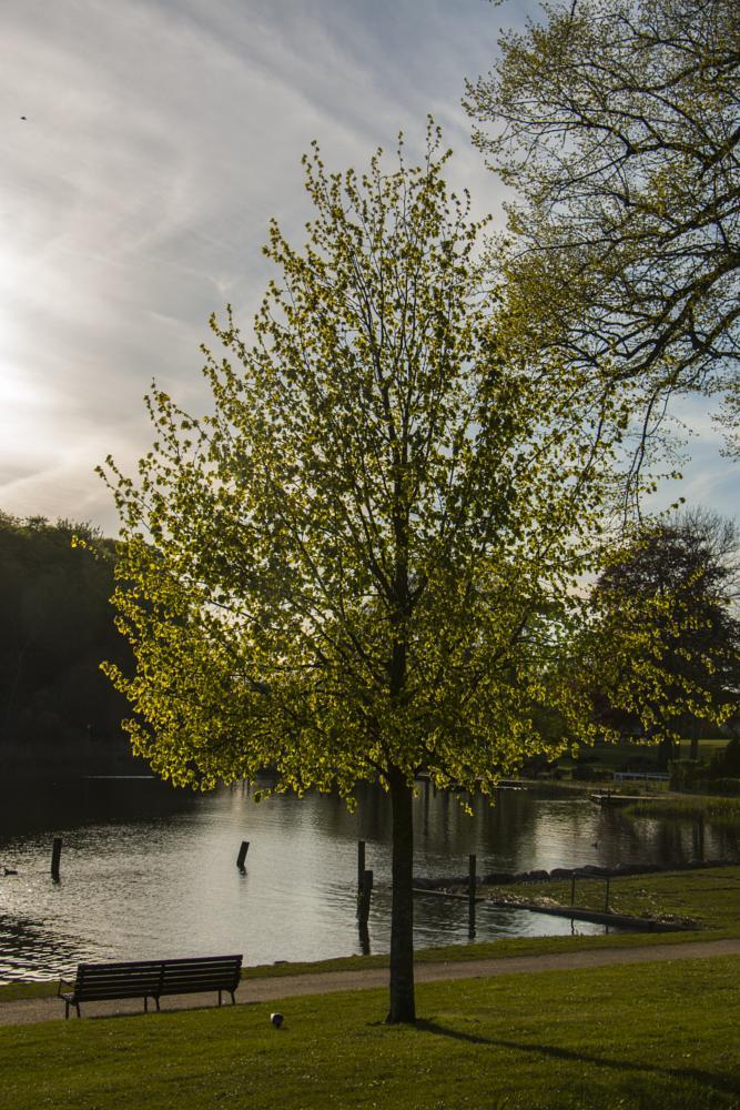 Photo in Nature #tree #lake #sunset