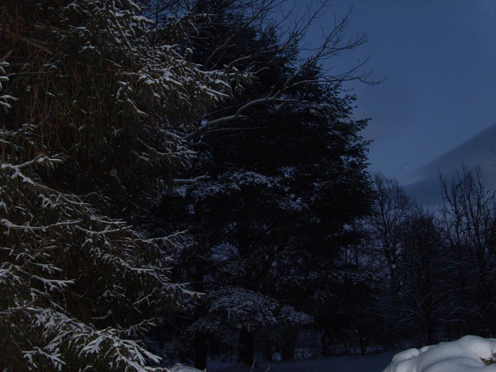 Photo in Nature #emerald city farm #sabillasville #maryland #snow #pine #winter