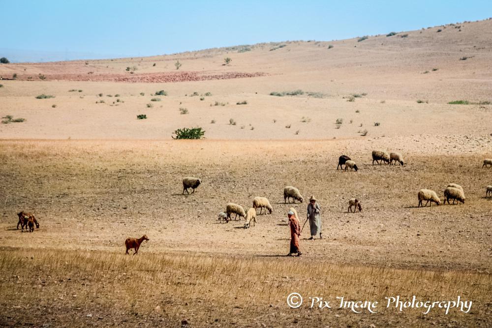 Photo in Landscape #sheep #sheepherd #morocco #landscape #travel