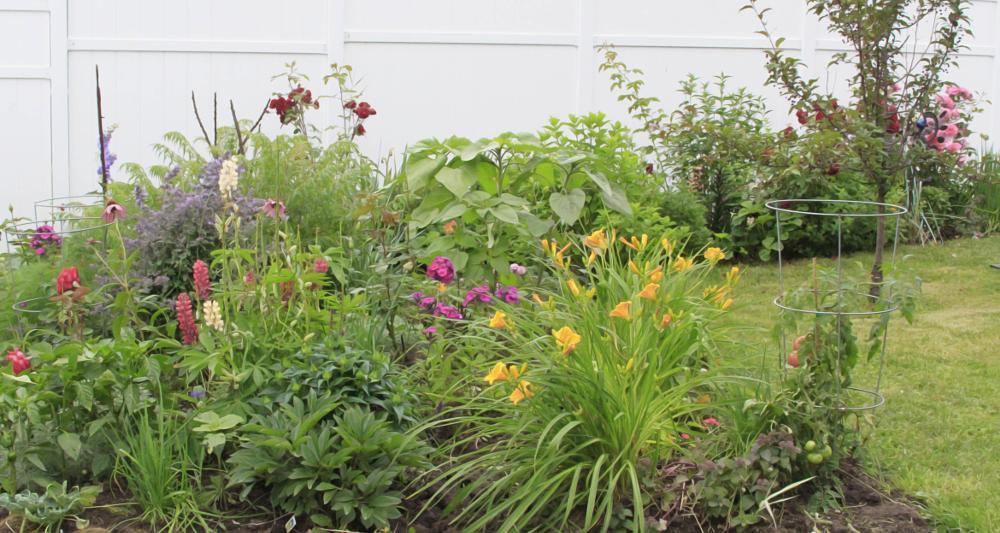 Photo in Landscape #gardening #flowers #yard #summer #garden