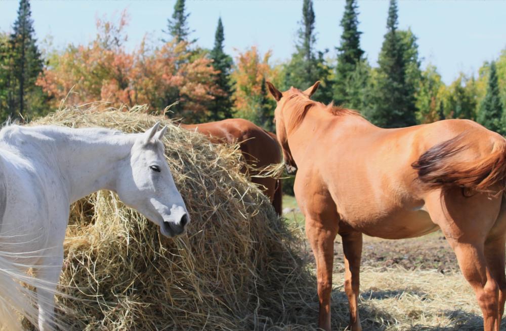 Photo in Landscape #ranch #horses #minnesota #farm #animals
