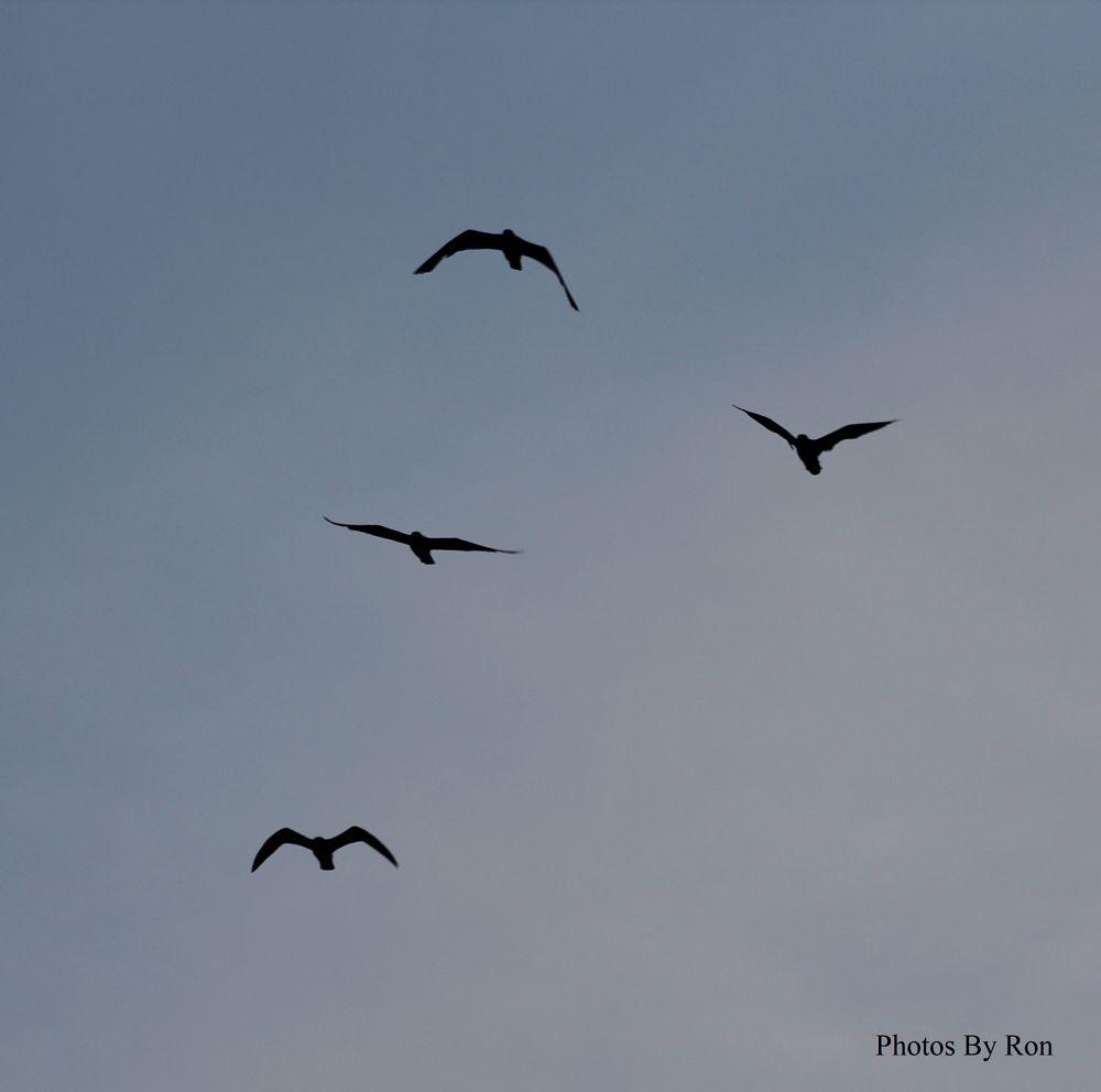 Photo in Nature #sky #birds #random shots