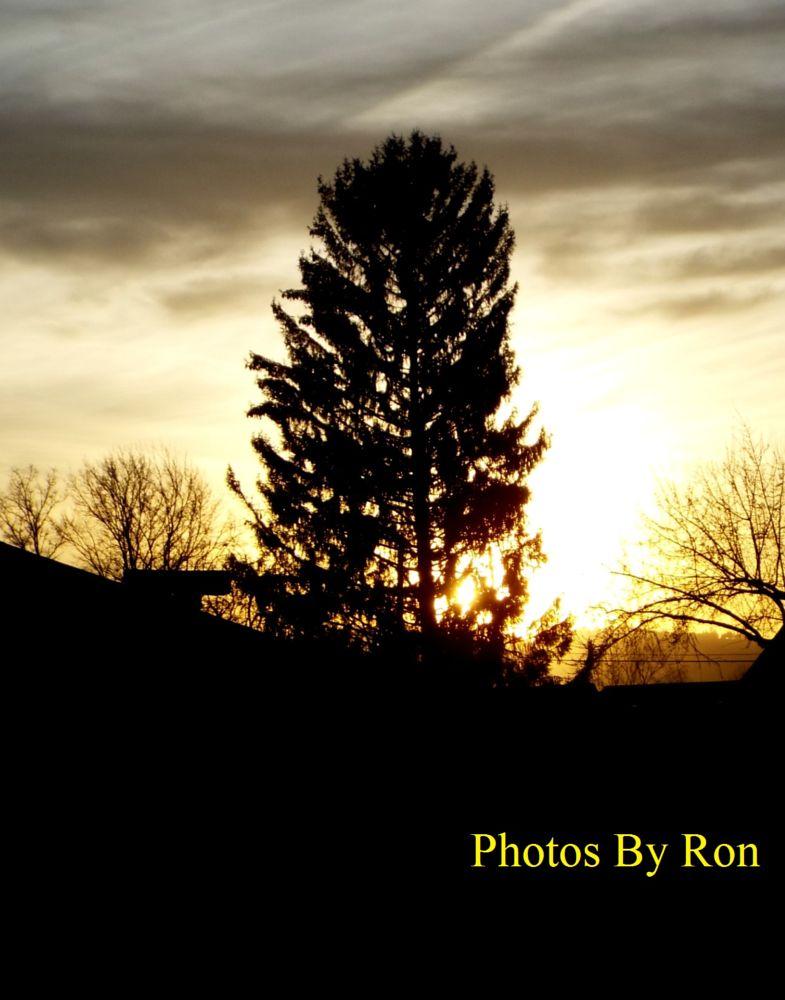 Photo in Nature #sunset #sky #tree #random shots