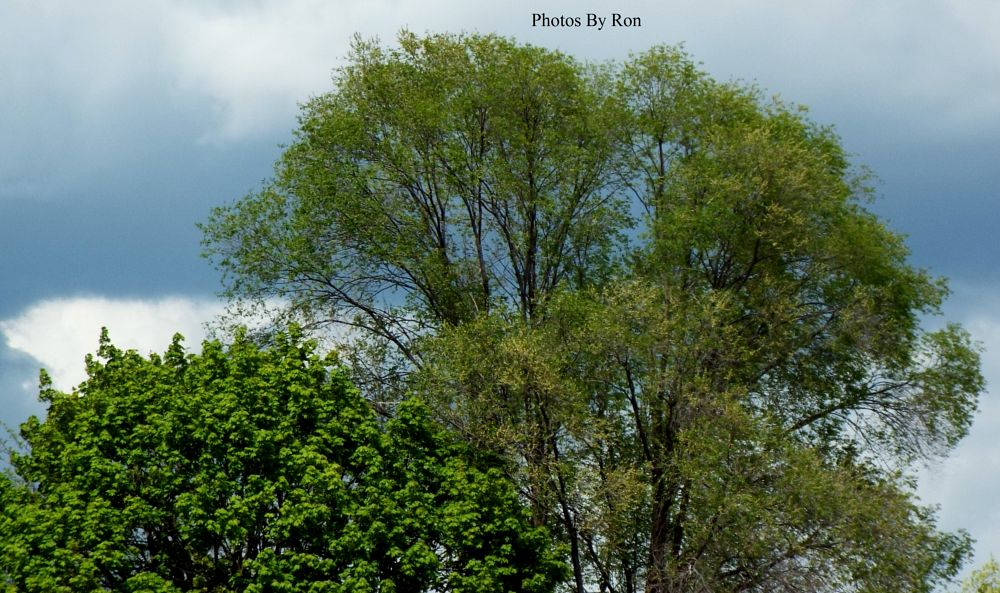 Photo in Nature #sky #clouds #trees #random shots