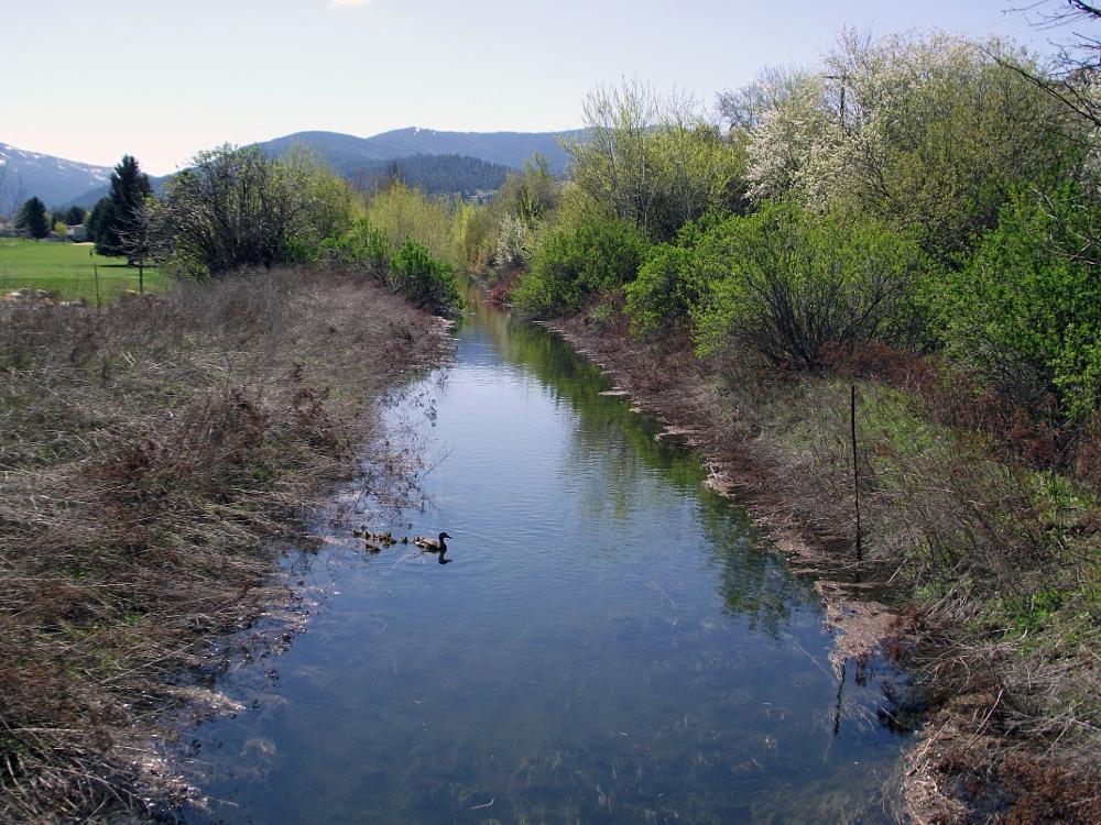 Photo in Nature #ducks