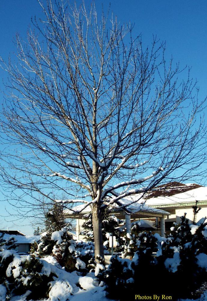 Photo in Nature #tree #snow #blue sky #random shots