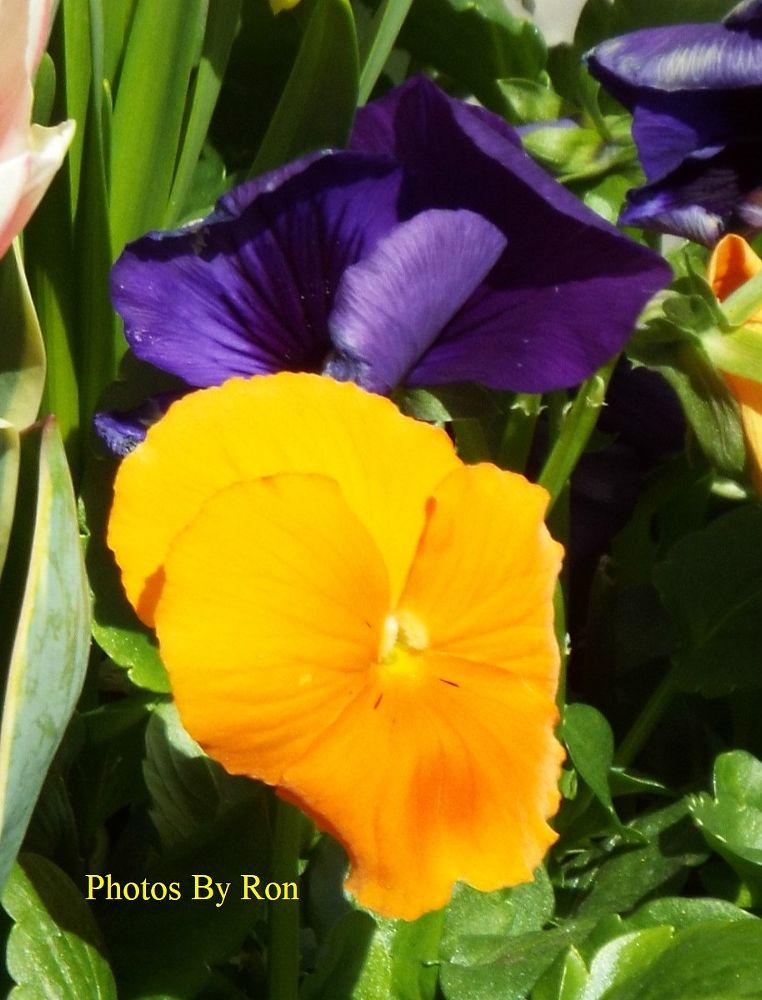 Photo in Nature #plants #random shots