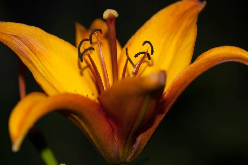 Photo in Film #macro #tooth #flower #fantasy