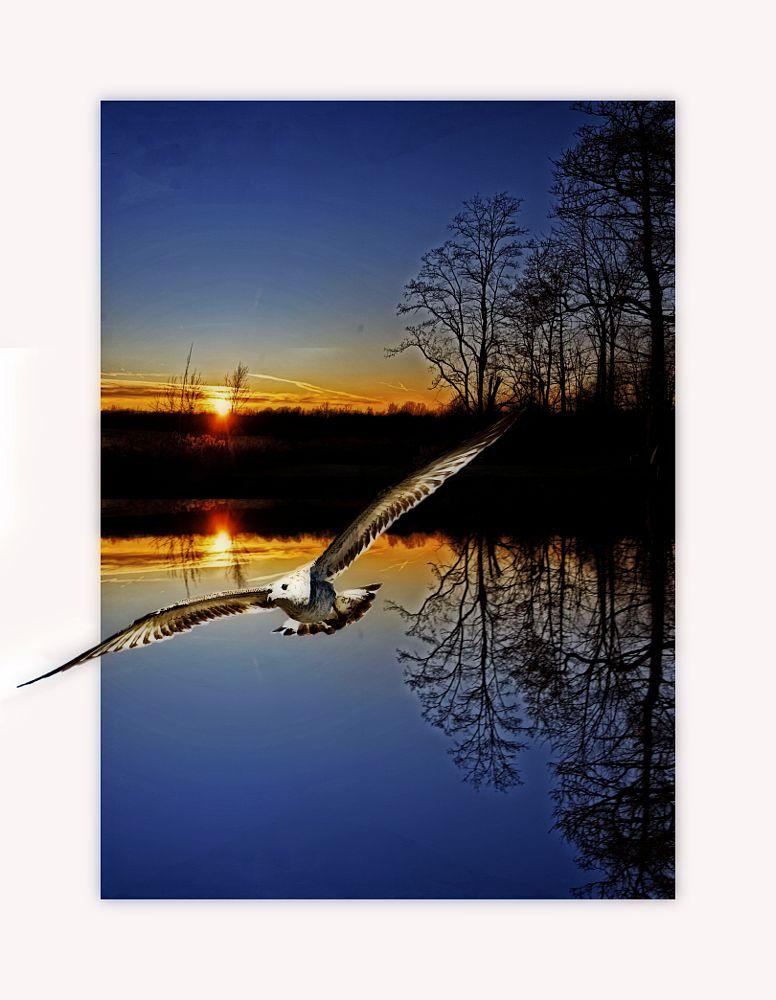 Photo in Landscape #nature #sunset #seagull #bird #trees