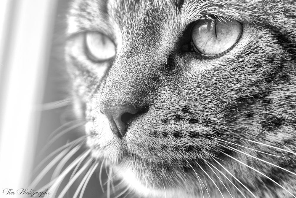 Photo in Random #ypa2013 #animal #cat