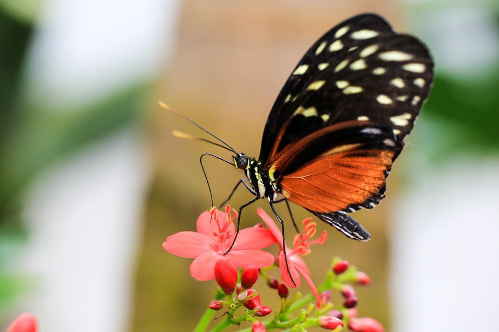Photo in Macro #butterfly #flower #macro