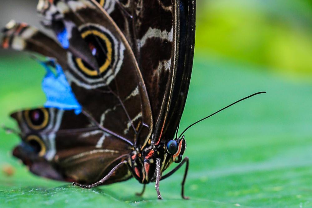 Photo in Macro #butterfly #macro #beauty