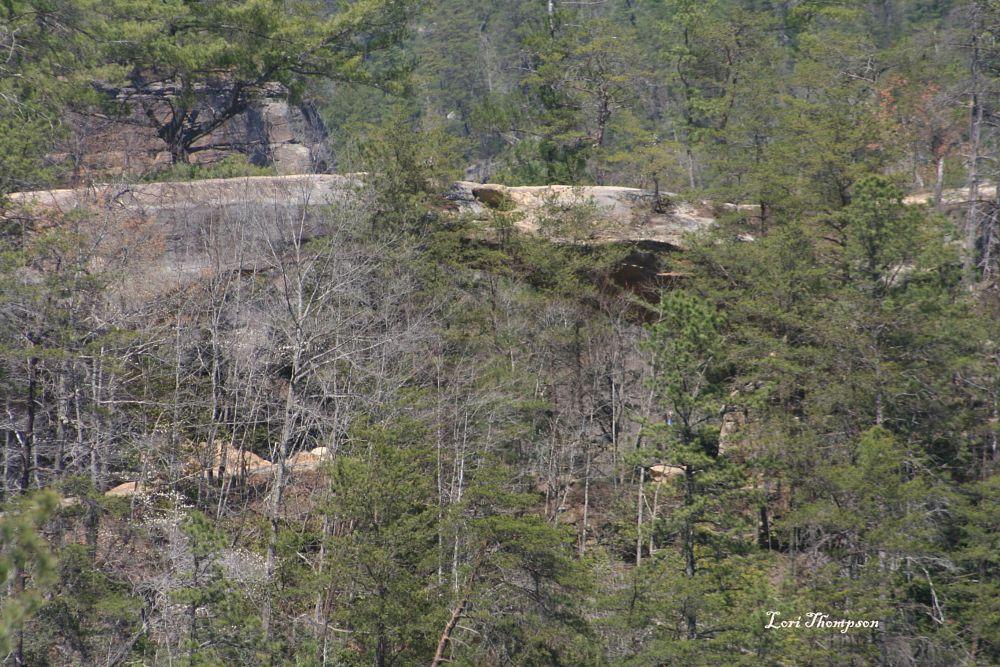 Photo in Landscape #red river gorge natural bridge #natural bridge #kentucky #state park