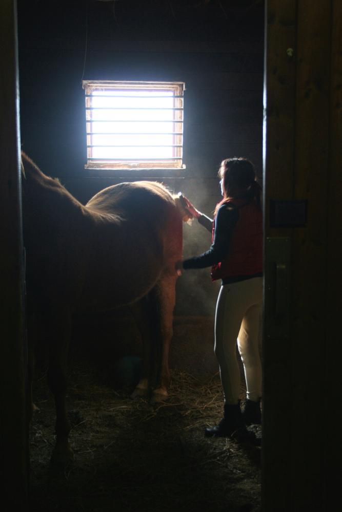 Photo in Animal #horse #kentucky #bluegrass #horses #fall