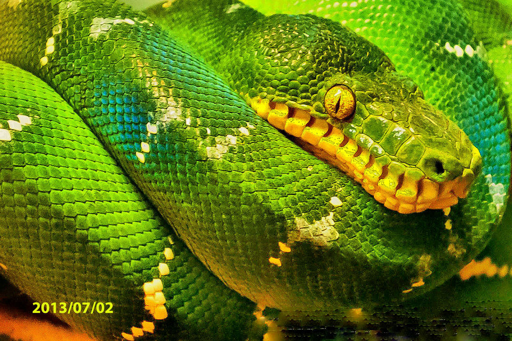 Photo in Random #zoo #snake #green #yellow #mother nature