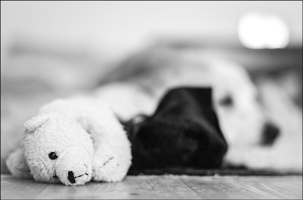 Photo in Black and White #black & white #dog #dogs #animal #golden retriever #toys #leica