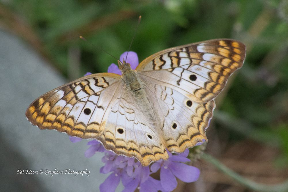 Photo in Nature #insect #butterfly #nature #macro #nikon