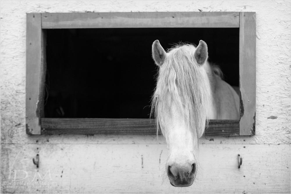 Photo in Animal #horses #b&w #window