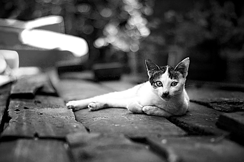 Photo in Animal #powerpuffpunkies #sandakan #sabah