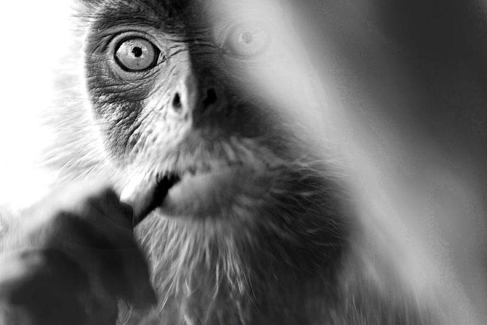 Photo in Animal #sandakan #sabah #powerpuffpunkies