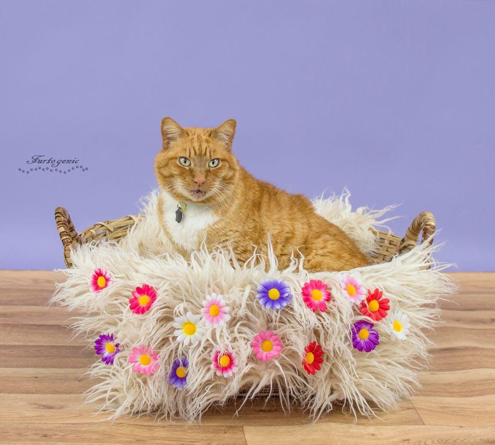 Photo in Animal #cat #animal #pet #feline #ginger #studio #flower #nikon #d3200