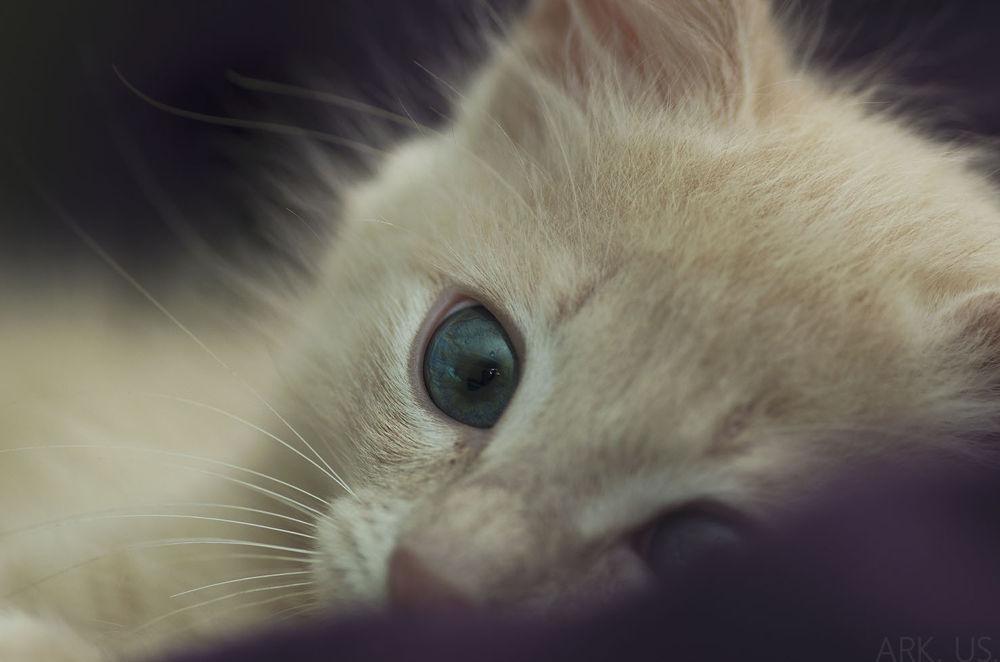 Photo in Animal #cat #kitten #kitty #eye #cute