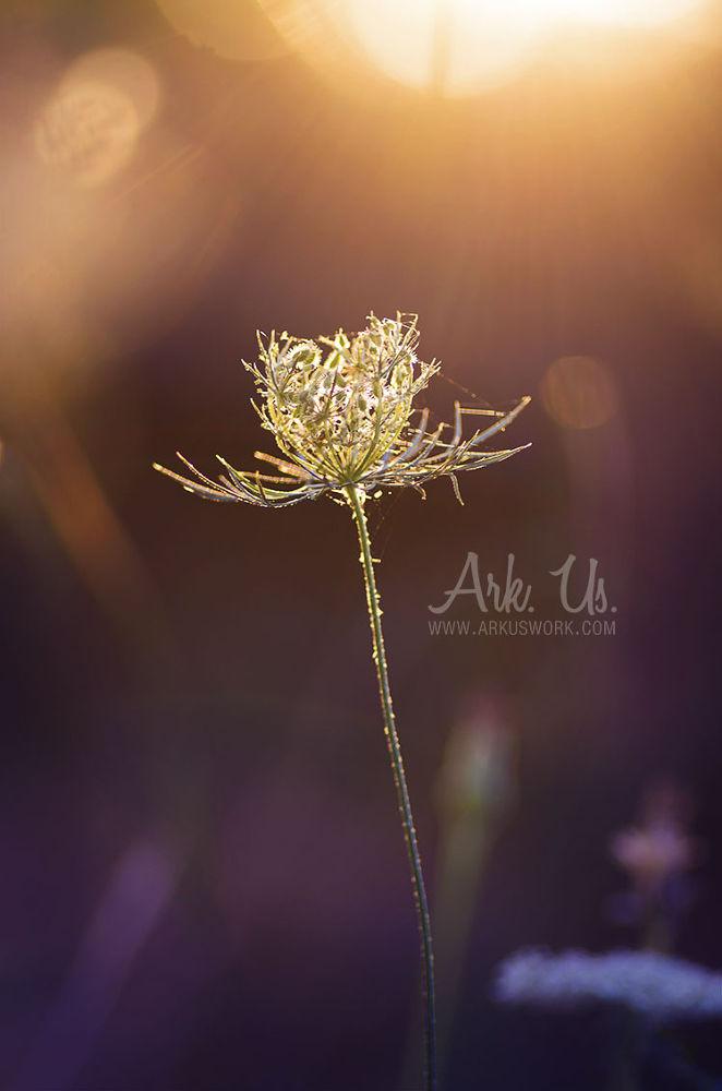 Photo in Nature #light #purple #orange #sun #plant