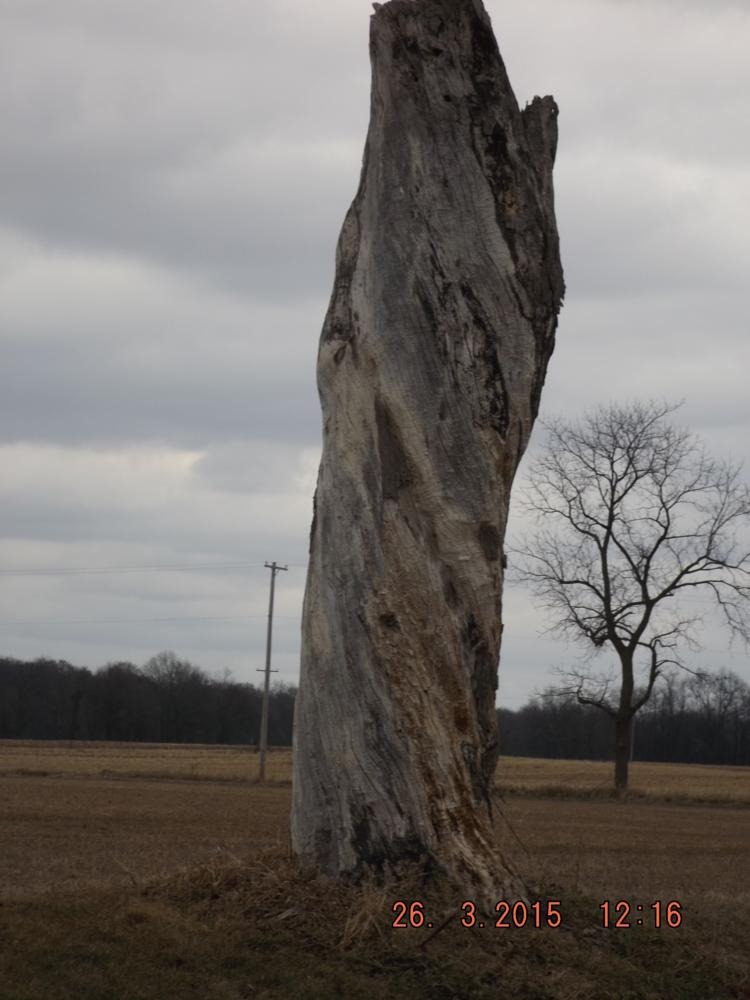 Photo in Rural #twisted #dead #tree